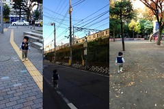 朝散歩 (2012/11/20)