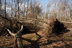 Hurricane Sandy Damage at Mill Pond Park, Bellmore, New York. 2012