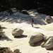 "On glacial-deposited ""erratics"" in Yosemite National Park (2012) by Stepthos"
