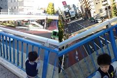 歩道橋の上から (2012/11/25)