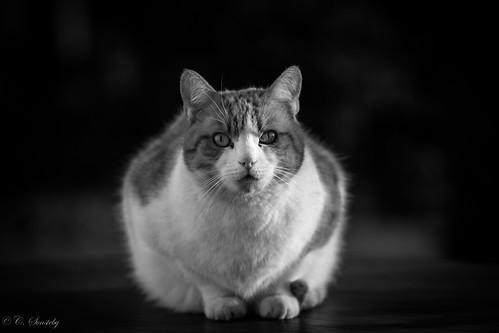 blackandwhite bw cat canon ef70200mmf4lisusm