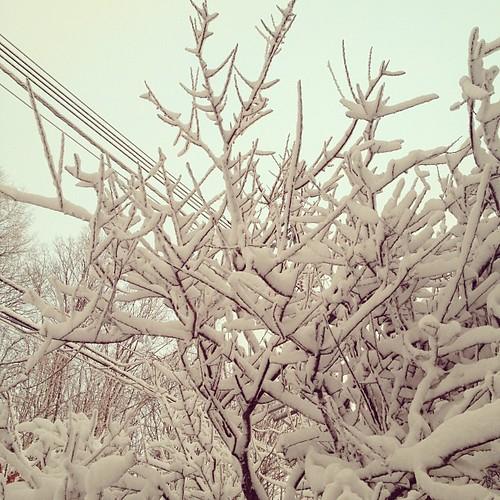 雪が!すごい!