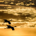 Sandhills Against the Sunset - Bosque del Apache by Jim Frazee