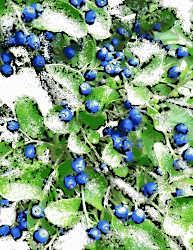 Dusting of Snow on Sapphire Berries (Digital Woodcut) by randubnick