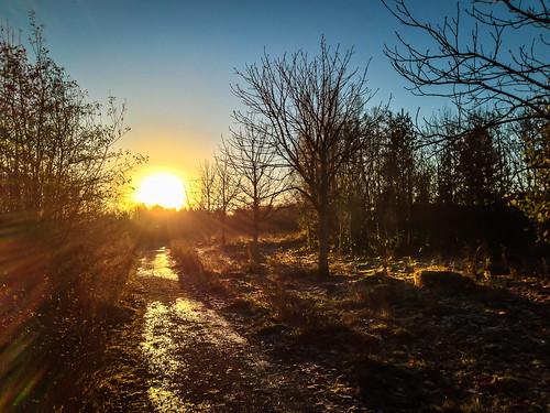 trees sun sunrise project woods 365 iphone