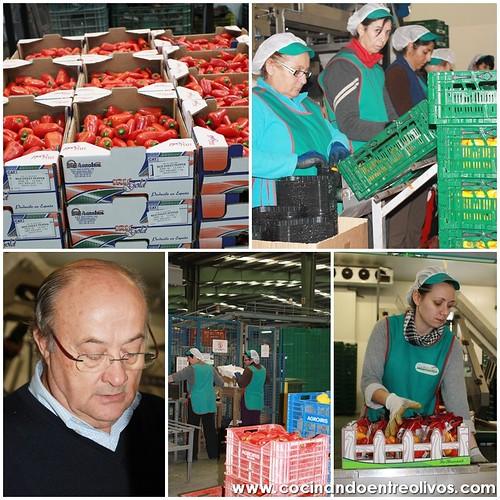 Ruta agrícola-gastrómica por Almería 3