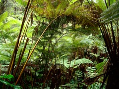fern_jungle1