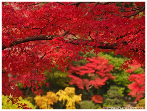 Red Leaves on Tsushima Srine #06
