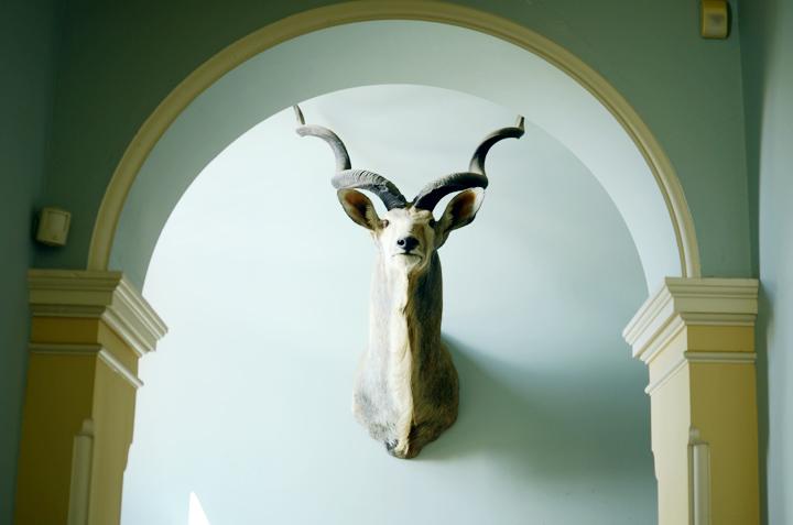 head antlers