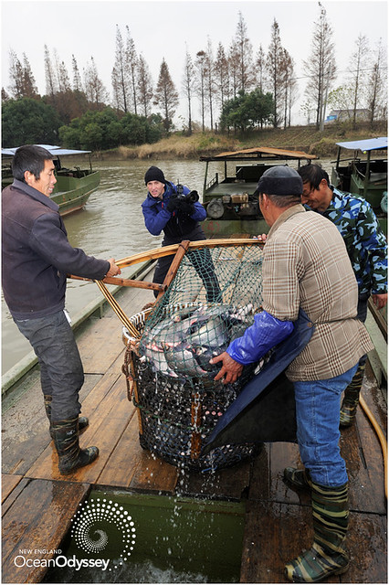 Fish Farming in Wujin, China