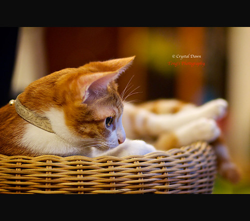 Audi in the Basket by © Crystal Dawn Photography