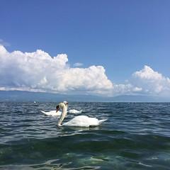 #slowdown by the lake of #neuchatel