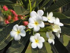 Bhubaneshwar 35 - flowers