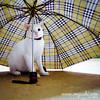 Cat 150: Lady Rainy White