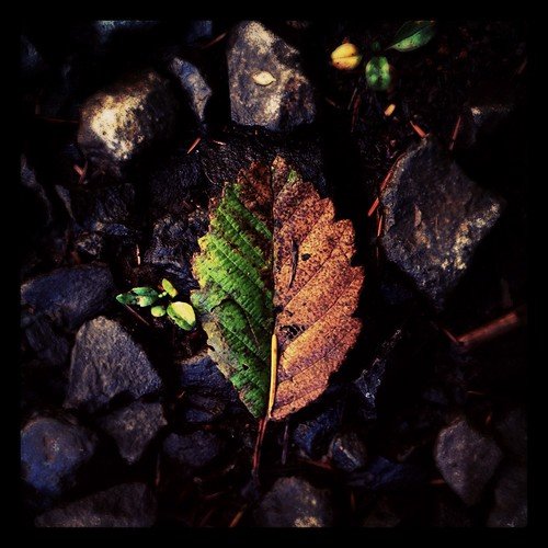 boilerfall by Nature Morte