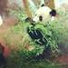 panda by THE JOHN GALT PROJECT