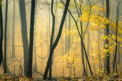 automne 12