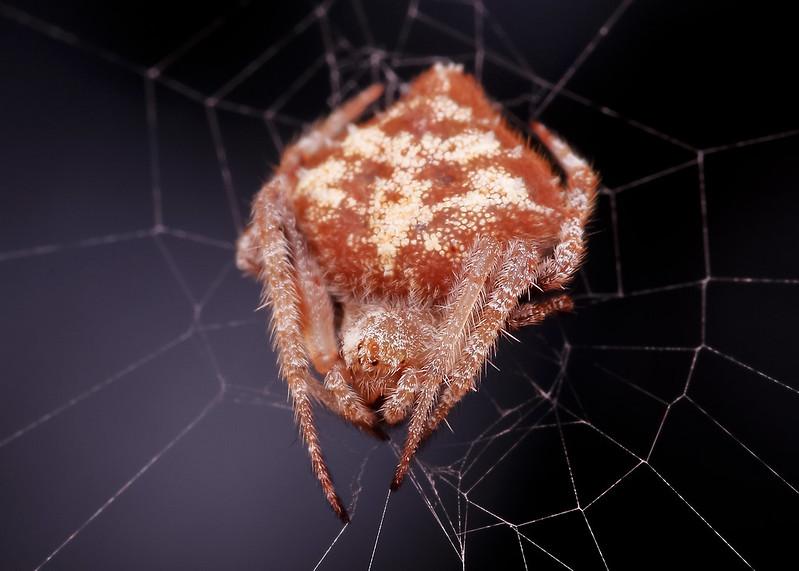 [IMGP0436-pp] Spider