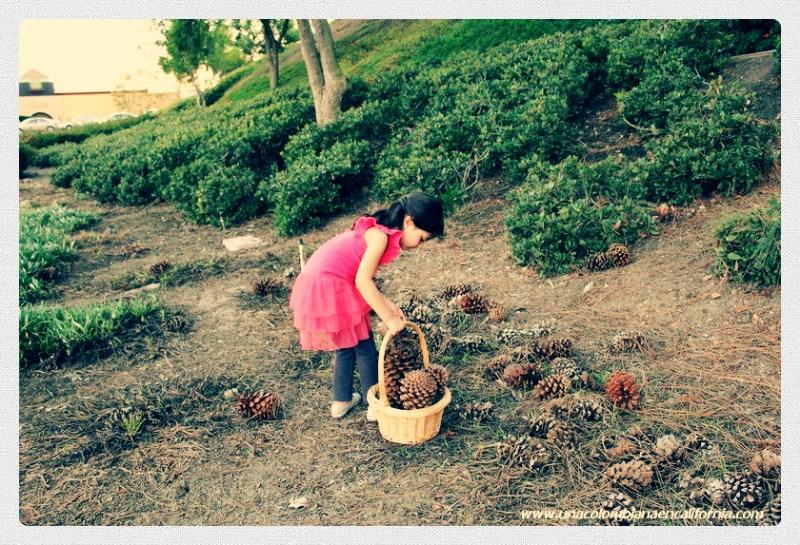 Recogiendo pine cones