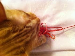 Cat being a cat