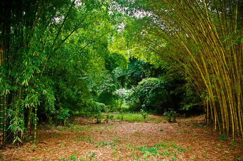 africa travel trees tree nature landscape nikon rainforest bamboo ghana jungle ashanti butterflysanctuary ashantiregion tamron18270 nikond5100