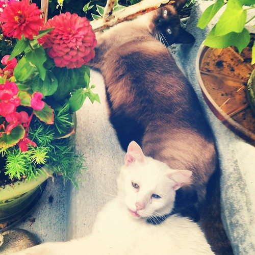 cats lounging together on porch in summer