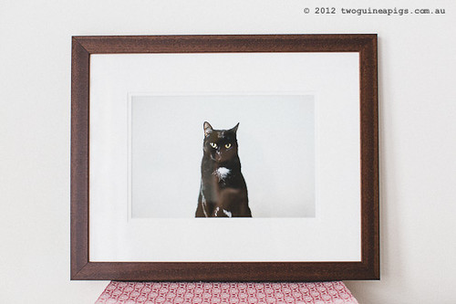 standard frame in classic dark wood brought to you by twoguineapigs pet photography