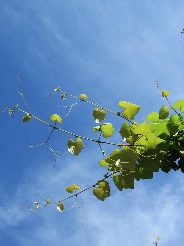 Aquella foto de las ramas