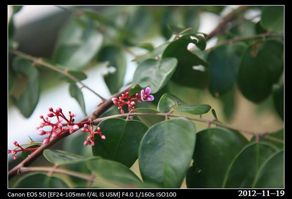 20121119_Flower40