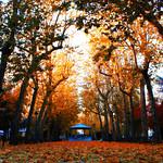 Parque marrón
