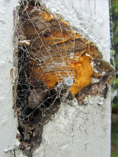Dry rot definition/meaning