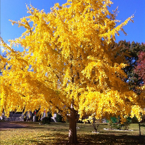 Fall Foliage, Texas Style. #nofilter