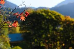 20121026 Okuhida 3