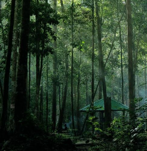 [フリー画像素材] 自然風景, 緑色・グリーン, 風景 - マレーシア ID:201211290600