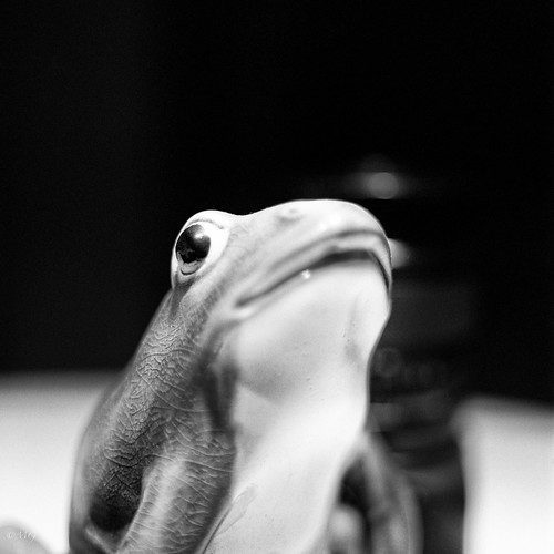 Kermit ? (500CM 80mm test) by M9ike