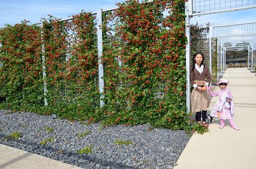 Arbour Garden
