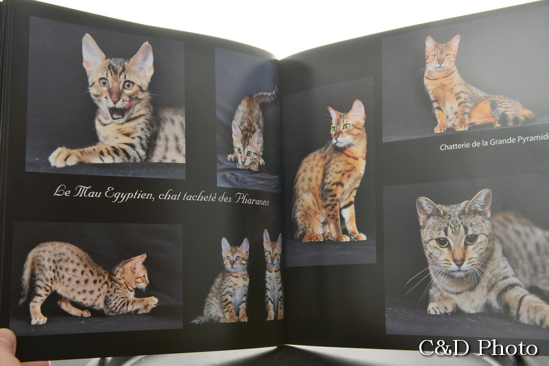 Chats Maus Egyptiens du livre les Chats de Race de Cnd photo