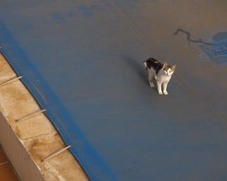 El gato que esta triste y azul se ha colado en el patio
