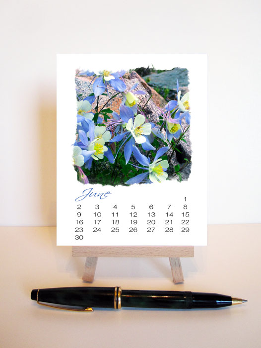 A Year of Flowers 2013 Desk Calendar