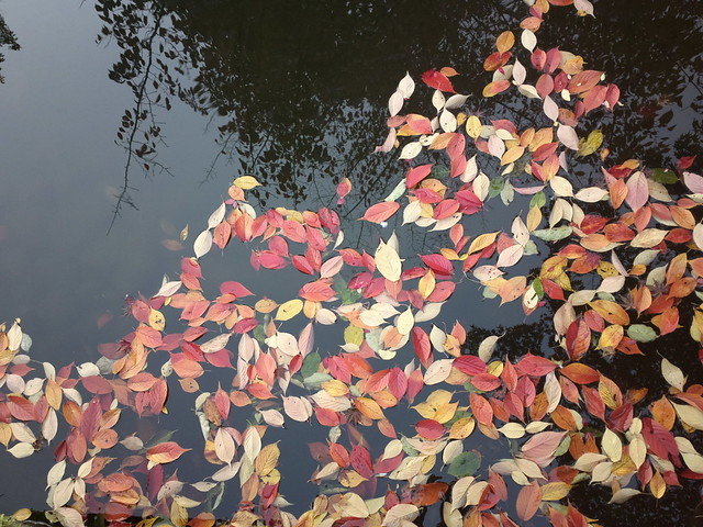 Leaves on the pond