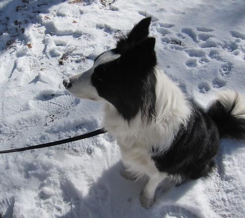 雪を食べて鼻が真っ白です・・ by Poran111