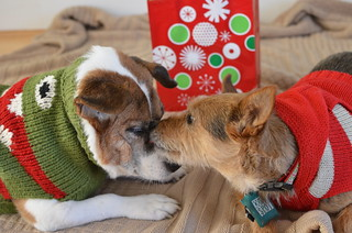 Holiday card outtake #2