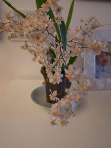 山野家的文心蘭
