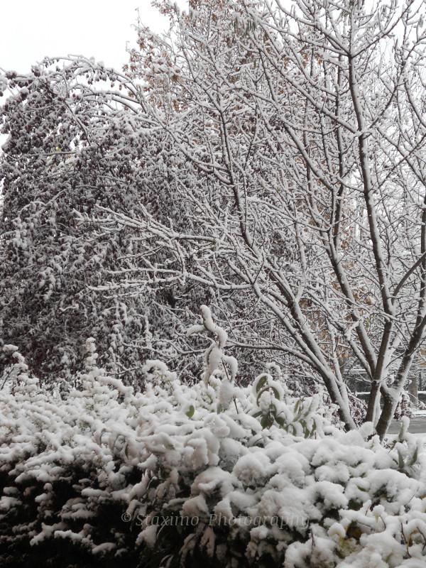 Neve 08/12/2012