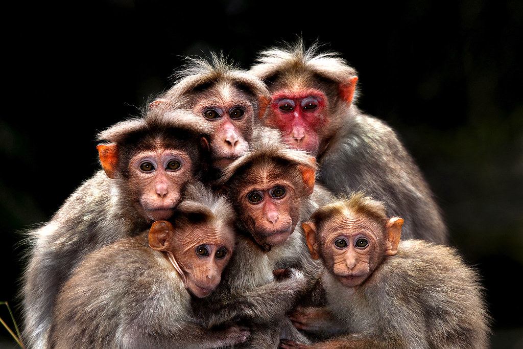 Family portrait by H-Satish, Bangalore, India
