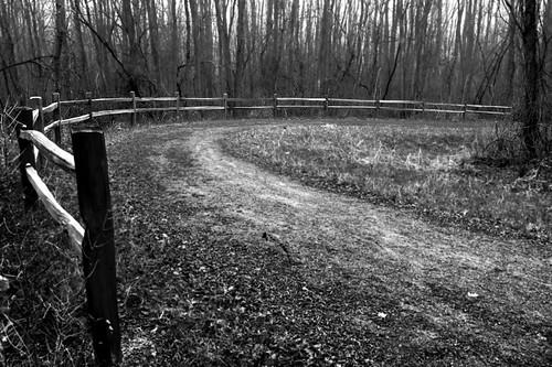 trees blackandwhite usa fall nature digital america fence fun woods midwest december pov michigan panasonic adventure trail modified curve processed 248 2012 paintcreektrail