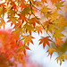 autumnal leaves by I.E.