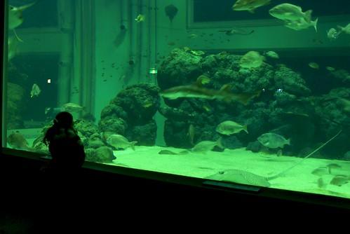 上越市立水族博物館ナイトツアー