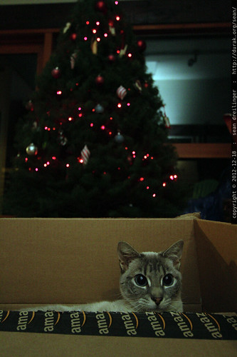 cat in a box, basking in the glow of the newly strung xmas lights    MG 0533