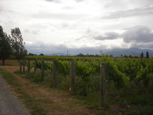 One of the vineyards in the Marlborough Wine Trail